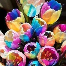 SILKSART 15 Nice Bulbs! Tulip Bulbs early bloom Perennial Bu