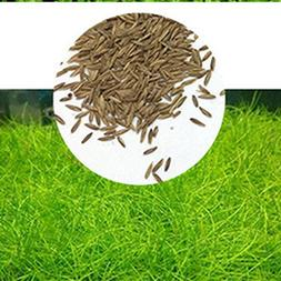 Fashionwu Aquarium Water Grass Seed, Garden Fish Tank Foregr