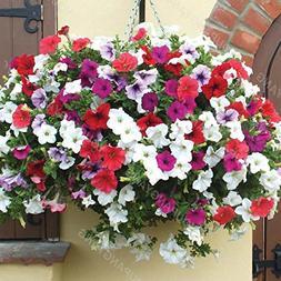 200 pcs/bag Petunia Seeds Bonsai Flower Seeds Short Height G