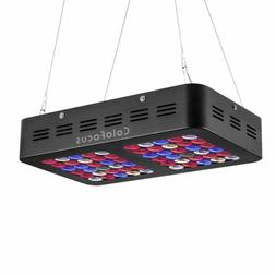 ColorFocus 600W LED Grow Light Two Model Bloom Growth Power