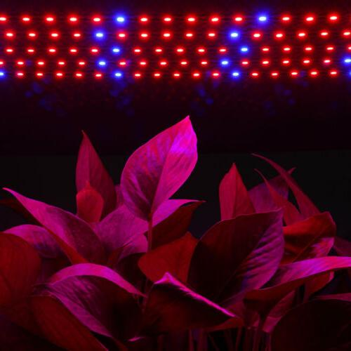5X Grow Light Spectrum Greenhouse Plant 12V Power