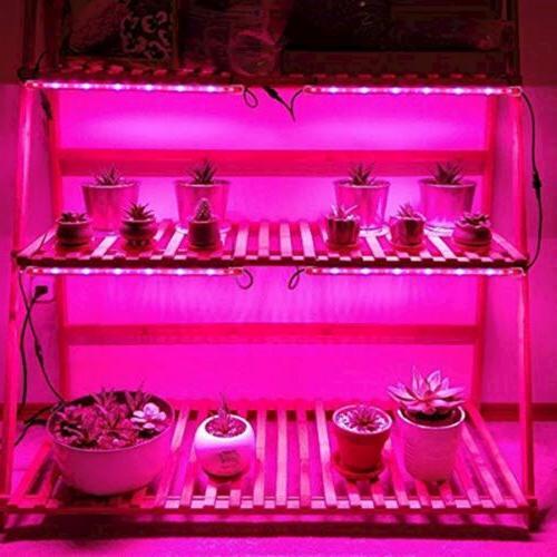 Lightimetunnel Grow 20W T5 Grow Strip Plant