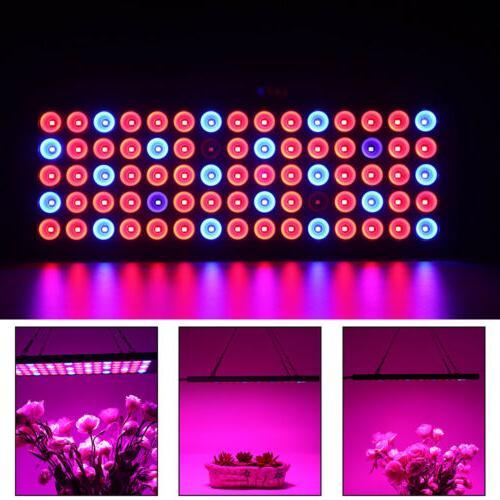2000w LED 75LED Lamp Hydroponic Plant