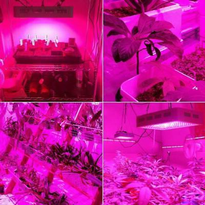 2000W LED Light Full Spectrum Plant Veg Care