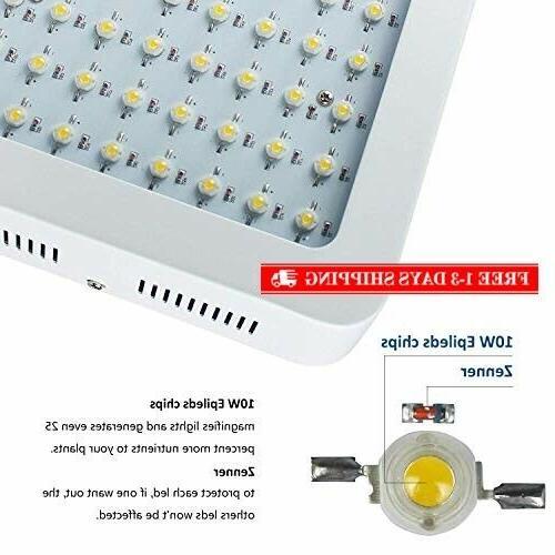 Roleadro Light Plant Light Full