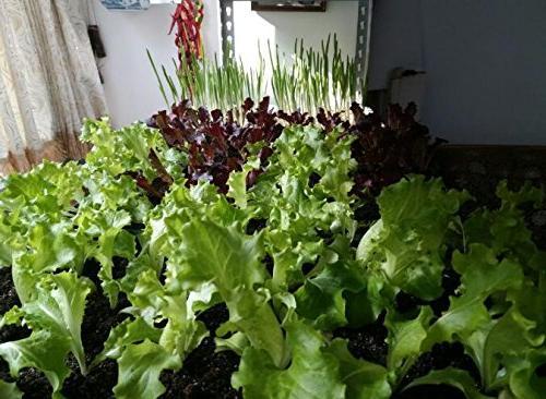 Ledytech Light, AUTO Off Plant Brightness Plants 2A