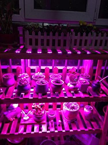 Ledy Led Grow 3.2ft 5050 Waterproof For Flower Seeds Blue With 12V