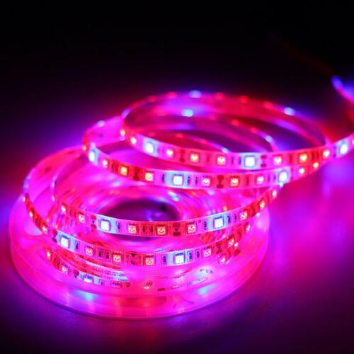 5M Light 300LED Spectrum Red&Blue 3/4/5:1 Power Supply