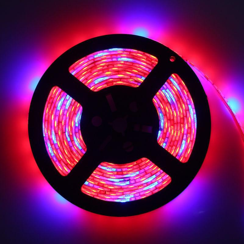 Blue/Red SMD 5050 Strip Full Spectrum for
