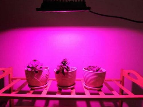COB Grow Ledy Waterproof Lights