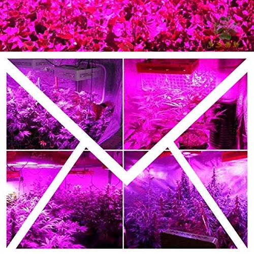 600W Dimmable Light, Full Spectrum Grow Light with Timer, Two Dimmable Double for Veg and Flower
