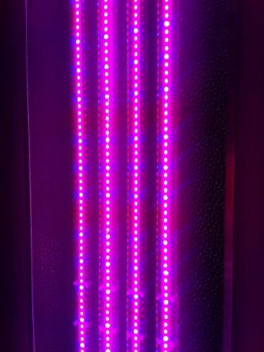 Light | 4 by 1 Foot 160W Magenta FullSun and Flowering! Over Energy Saving!