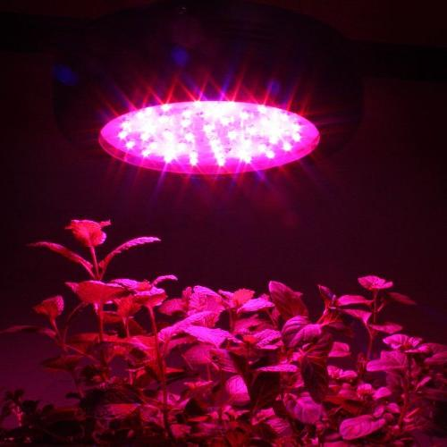 Apollo Horticulture Full Spectrum 180W Light Growing