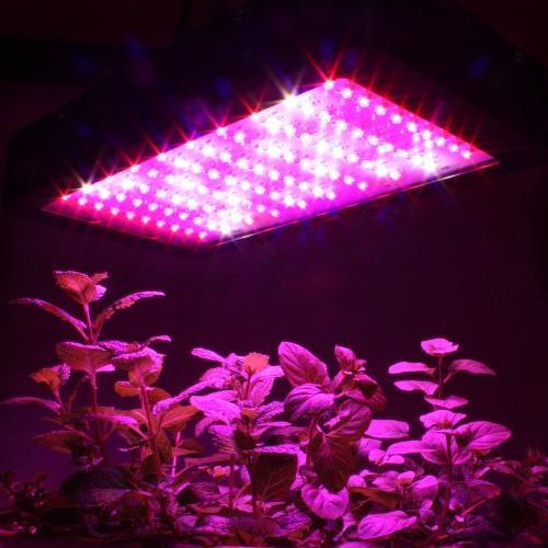 Apollo GL80LED Full Spectrum 240W Light Indoor Growing