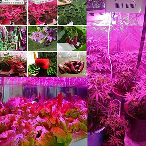 BEAMNOVA Grow Lights 300w Grow Full Hydroponic Growing Lamps