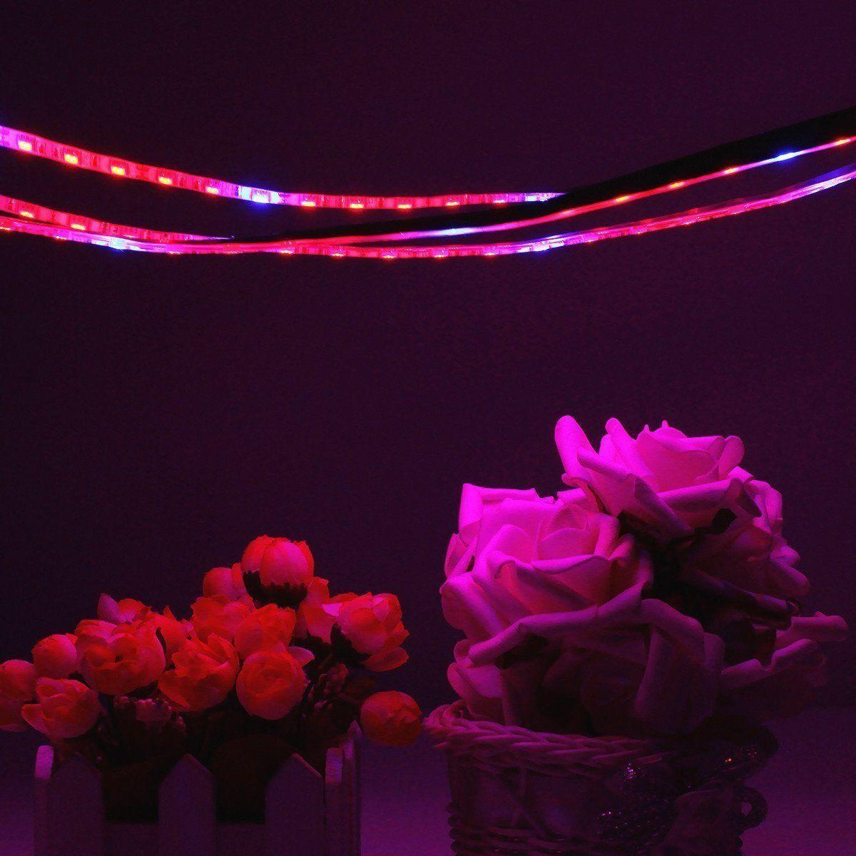 Full Grow Light Blue Red Greenhouse Plant