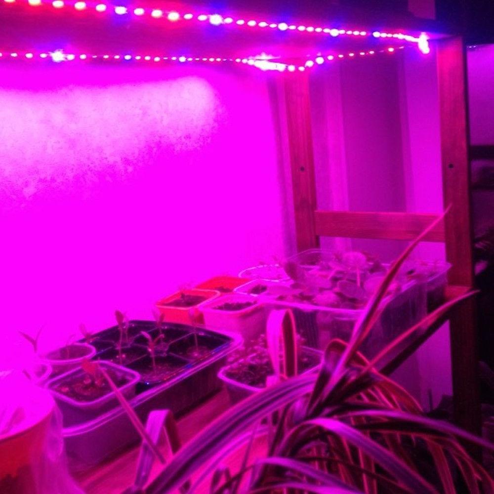 Full Light strip Red For Greenhouse Plant