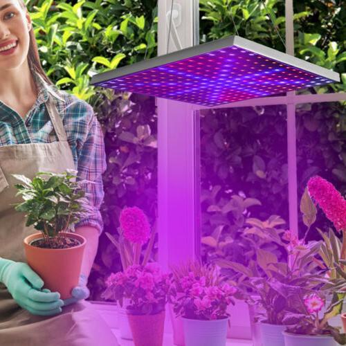 LED UV for Plant