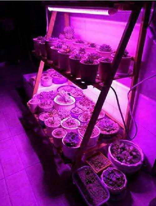 Led Grow Ledy 3.2Ft Waterproof Soft Strip Grow Light