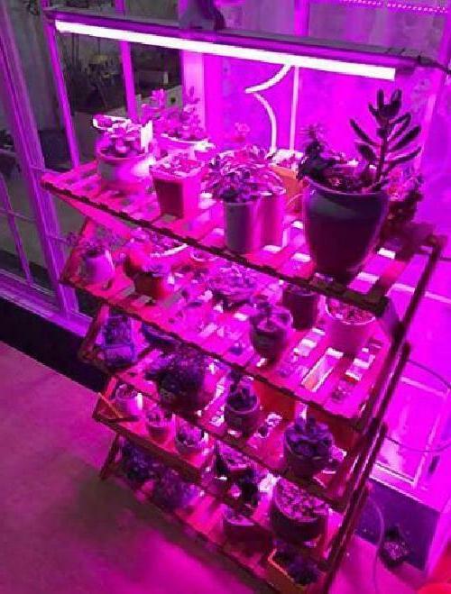 Succulent Waterproof Strip Light Bar New