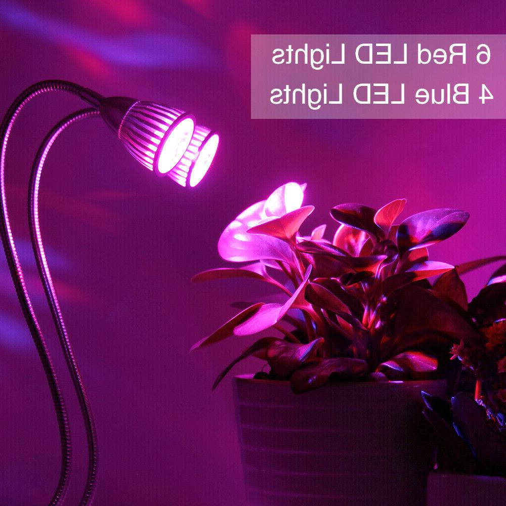 Plant Lamp Lights with Indoor Plants