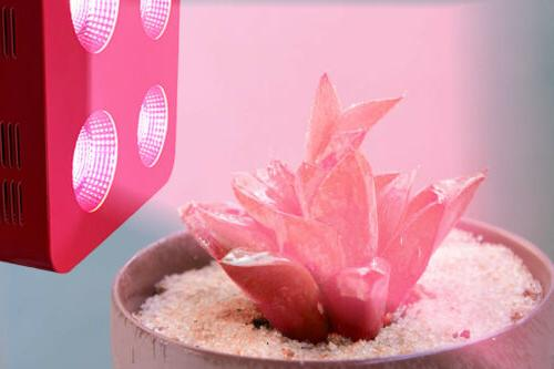 LED Plant Light COB for Indoor Flowers