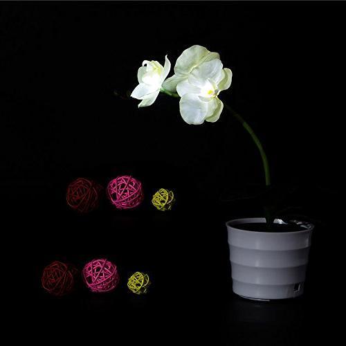 Awakingdemi LED Orchid , Battery Orchid Light,Solar LED Light for