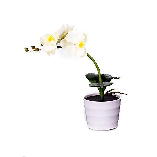 orchid flower light