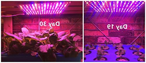 ACKE Grow Light, Plant PCBA, Hydroponic Light Board Greenhouse,Grow Stand, Growth Seedling, Herbs