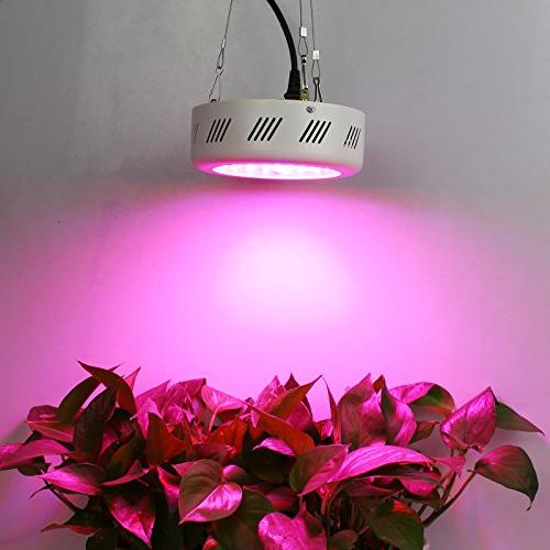 Roledro LED Grow 300W UFO LED Patio Grow with Timer Spectrum Hydroponics, for Home Grower